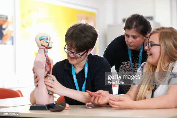 students in biology class - female anatomy stock photos and pictures