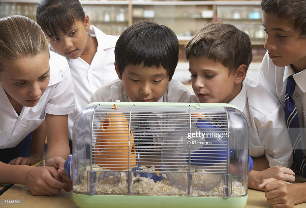 Students in class with the class pet : Stock Photo