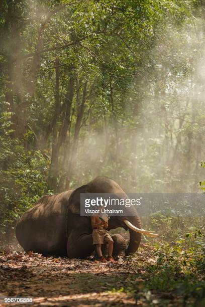 students in rural are reading book with elephants - elephant face stock photos and pictures
