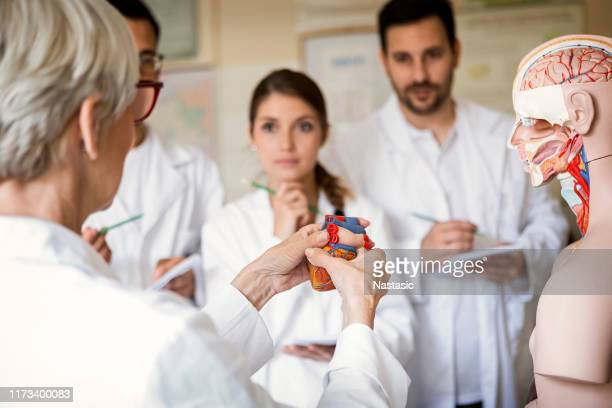 students of medicine examining anatomical model of human heart - heart internal organ stock pictures, royalty-free photos & images