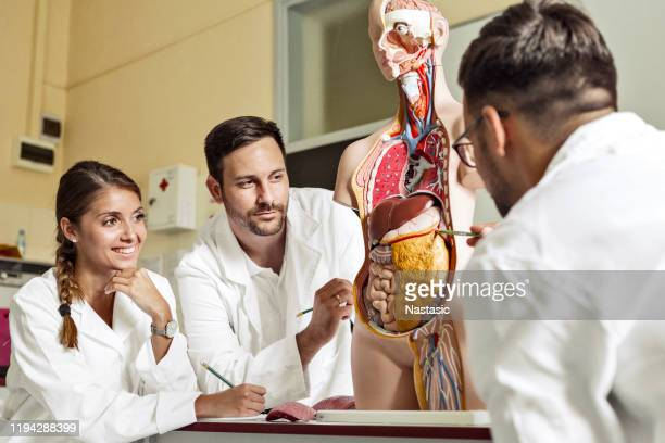 students of medicine examining anatomical model together - heart internal organ stock pictures, royalty-free photos & images