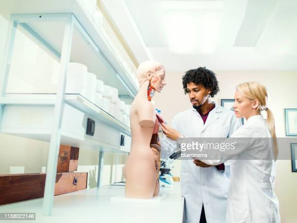 students of medicine examining model of human body - cardiac muscle tissue stock photos and pictures