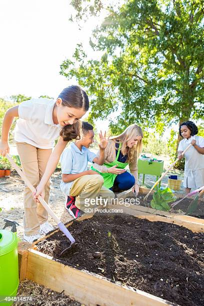 Students planting vegetables in garden during field trip outdoors