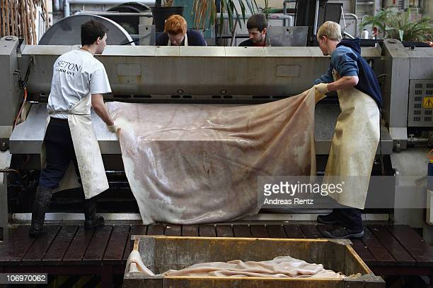 Students pull the premium leather after the washed rawhide of a cow was separted by a splitting machine in premium leather and cheap split leather at...