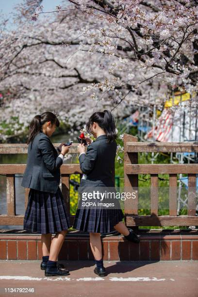 Students seen enjoying during the Iwakura Cherry Blossom Festival The highlight of the festival is long line of trees created by around 1400 cherry...
