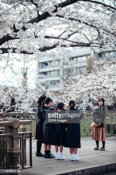 Students seen taking photos next to cherry blossoms at yamazaki river nagoya Aichi prefecture Japan The Cherry blossom also known as Sakura in Japan...