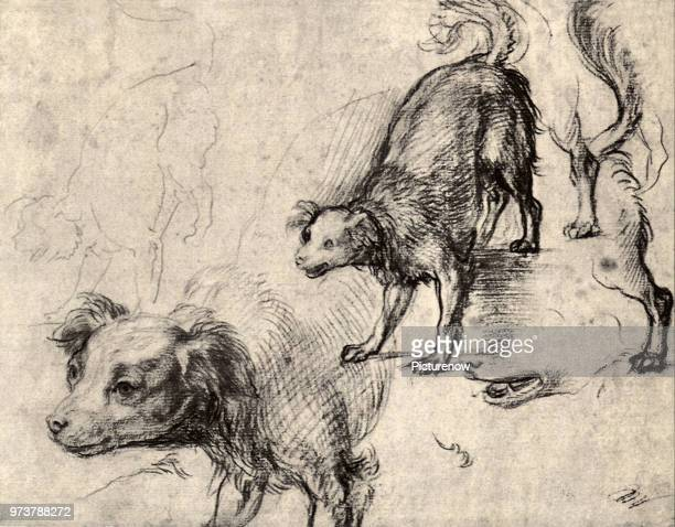 Studies of a Dog Sarto Andrea del 1520