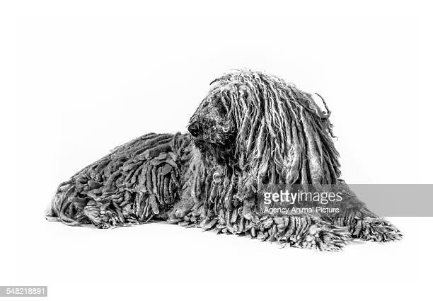 Studio shoot of dogs in black and white