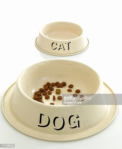 Studio Shot of a Dog and Cat Bowl