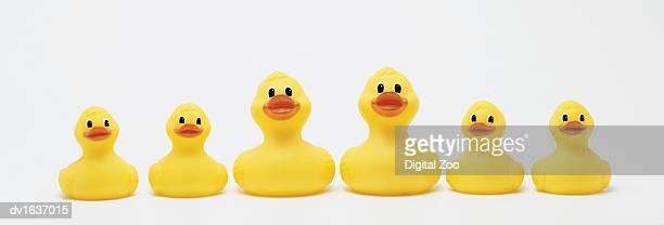 Studio Shot of a Family of Rubber Ducks