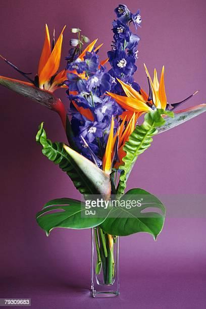 Studio Shot of a Flower Arrangement, Front View