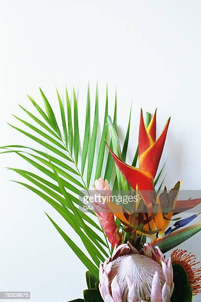 Studio Shot of a Flower Arrangement