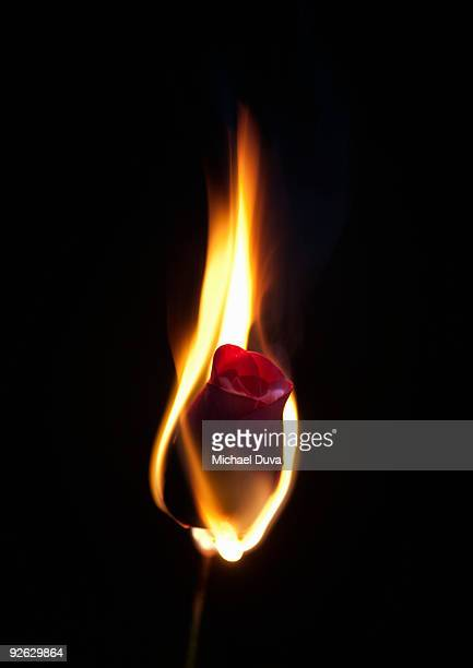 studio shot of a red rose on fire