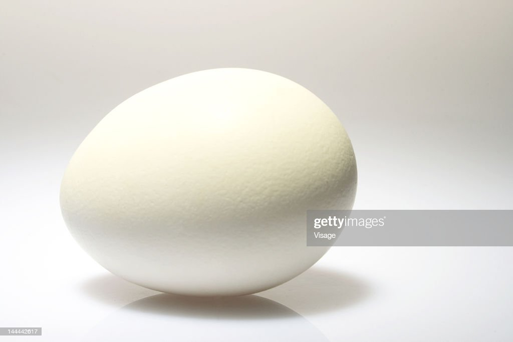 Studio shot of an egg : Stock Photo