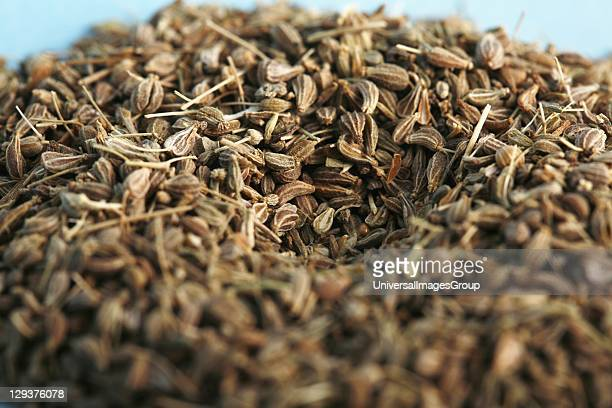 Studio shot of Anise fruit closeup Anise fruit contains anethole an aromatic compound that accounts for its distinctive licorice flavor Anise leaves...