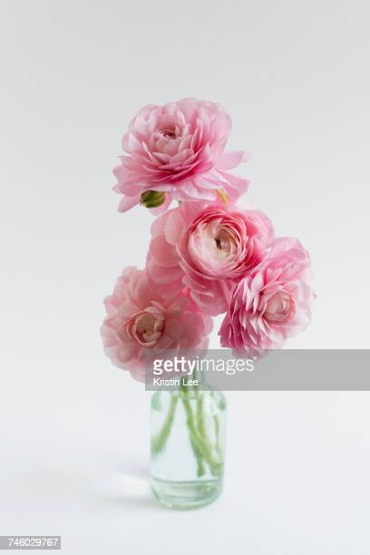Studio shot of bunch of ranunculus in glass vase on white background