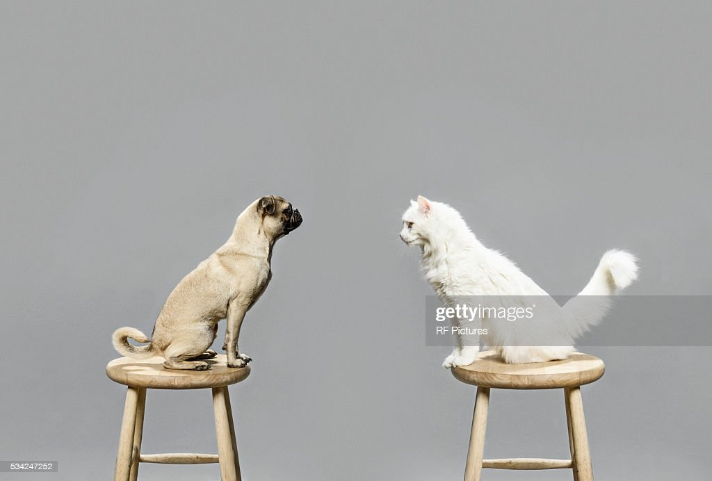 Studio shot of cat and dog looking at each other : Stock Photo