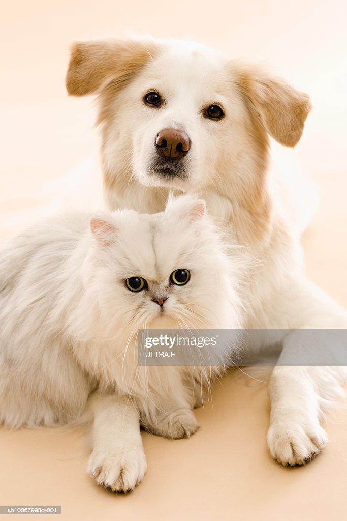 Studio shot of cat and dog : ストックフォト