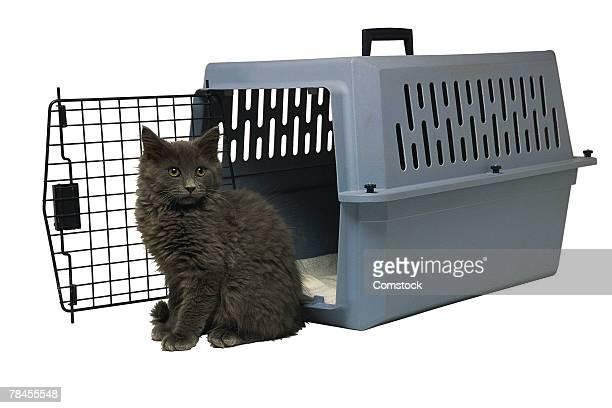 Studio shot of cat and pet carrier
