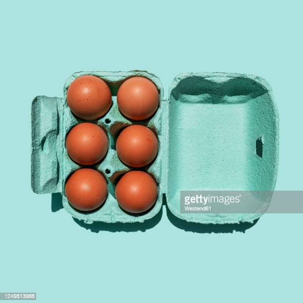 studio shot of chicken eggs in turquoise colored carton - animal egg stock pictures, royalty-free photos & images