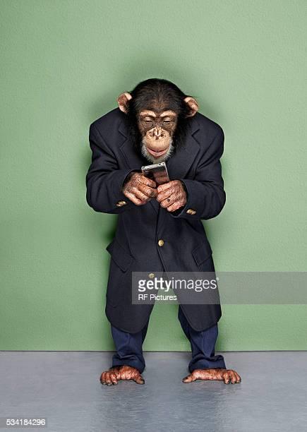 Studio shot of chimp wearing suit and using phone