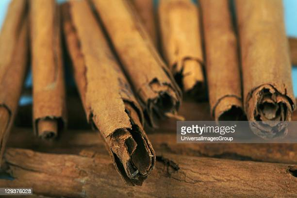Studio shot of Cinnamon sticks closeup Cinnamon sticks as a herbal medicine have been traditionally been used to treat toothache and fight bad breath...