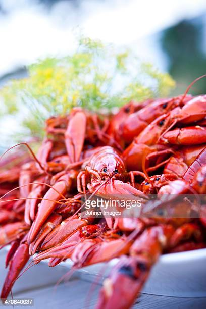 studio shot of cooked crayfish - crayfish seafood stock pictures, royalty-free photos & images
