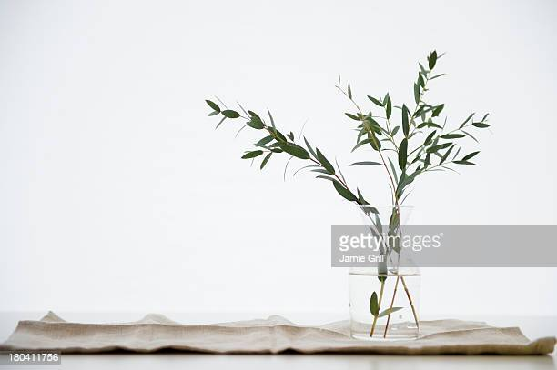 Studio Shot of eucalyptus twig in glass vase
