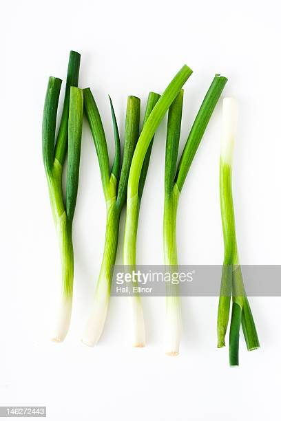 studio shot of fresh leek - leek stock pictures, royalty-free photos & images