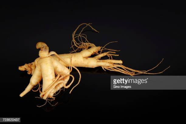 Studio shot of ginseng root