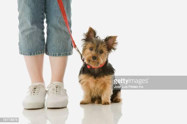 Studio shot of girl standing next to Yorkshire Terrier puppy