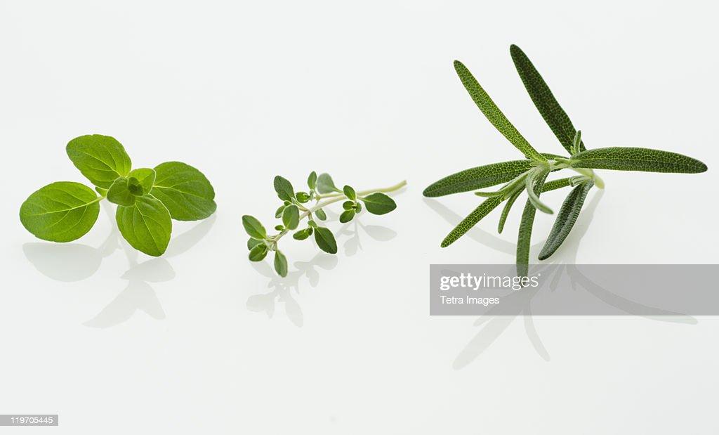 Studio shot of herb seedlings : Stock Photo