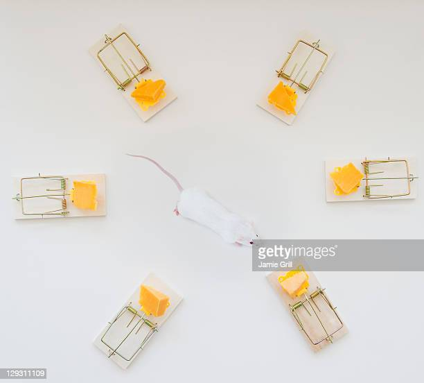 studio shot of mouse surrounded by mouse traps - surrounding stock pictures, royalty-free photos & images