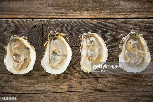 studio shot of oysters - oyster shell stock photos and pictures