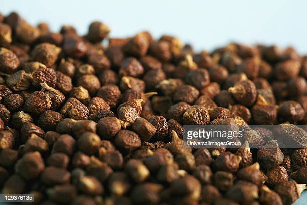 Studio shot of Paradise grains closeup Paradise grains a West African spice which gives a pungent peppery flavor are valued for their warming and...