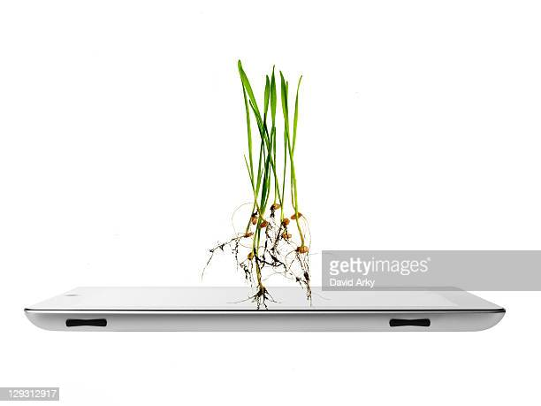Studio shot of plants over digital tablet