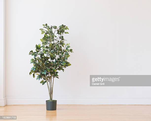 studio shot of potted plant - tropical tree stock pictures, royalty-free photos & images