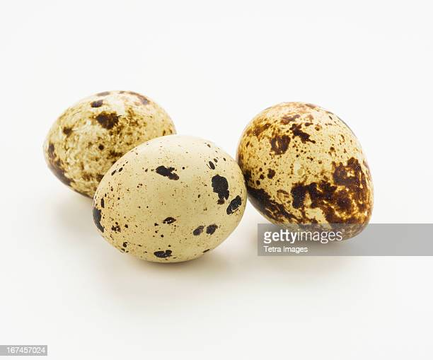 Studio shot of quail eggs
