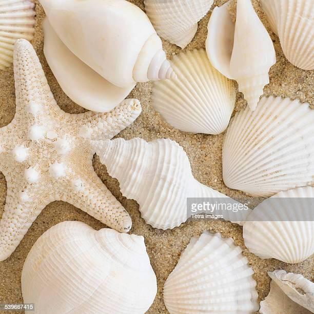 Studio shot of seashells