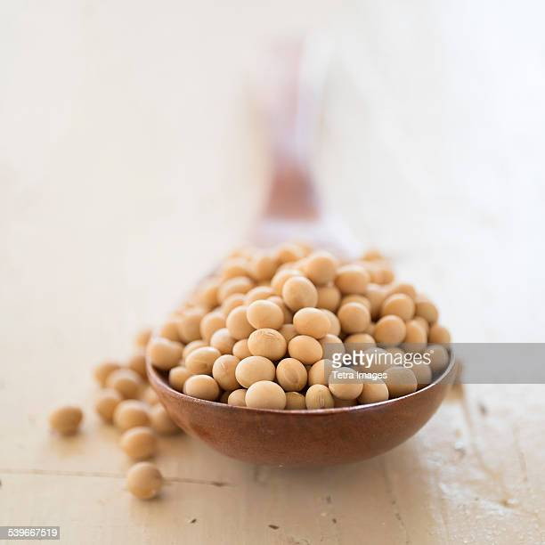 Studio shot of soy beans