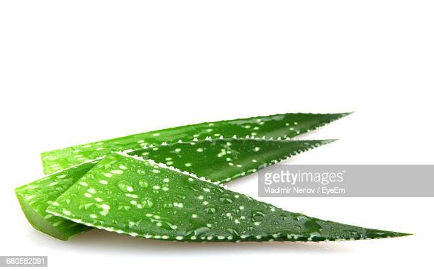 Studio Shot Of Three Aloe Vera Leaves On White Background