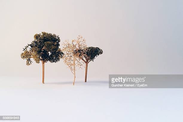 Studio Shot Of Tree Miniatures Against White Background