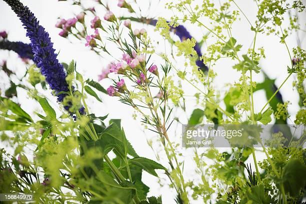 Studio shot of wildflowers