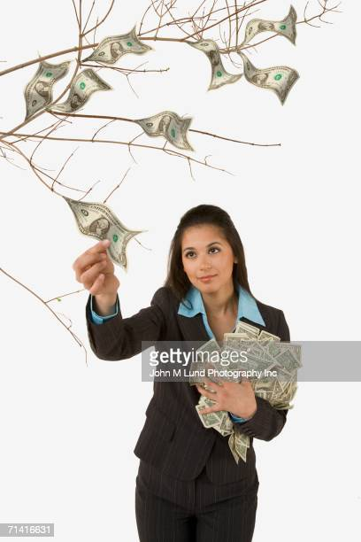 studio shot of woman plucking money off of money tree - money tree stock photos and pictures