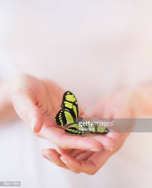 Studio Shot of woman's hands holding butterfly