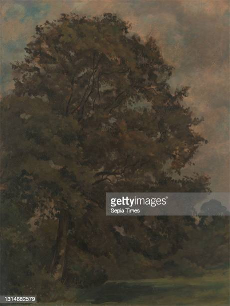 Study of an Ash Tree, Lionel Constable, 1828–1887, British, ca. 1851, Oil on paper on panel, Support : 15 1/2 x 11 3/4 inches , brown, field, green ,...