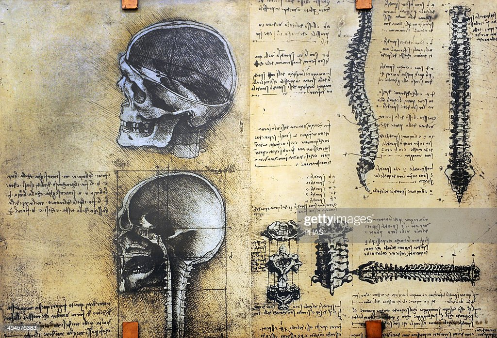 Study Of Anatomy By Leonardo Da Vinci 15th Century Skeletal