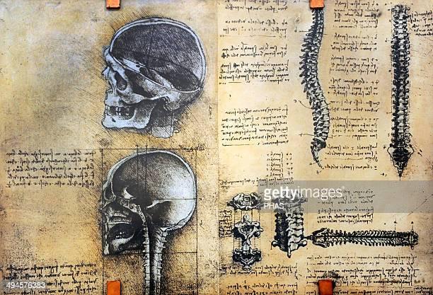 Study of anatomy by Leonardo Da Vinci. 15th century. Skeletal structure. National Museum of Science and Technology Leonardo da Vinci. Milan. Italy.