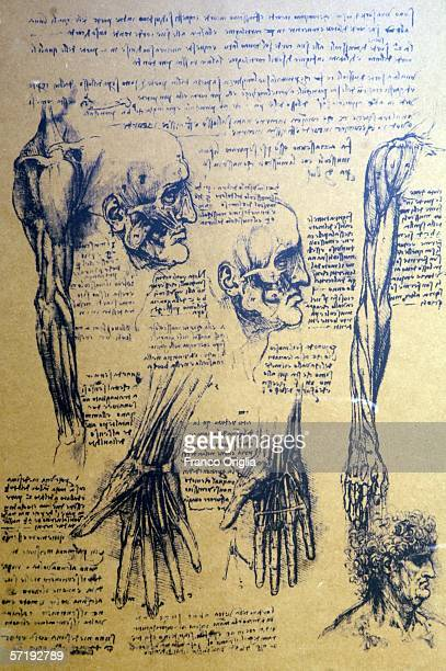 A study of anatomy by Leonardo is shown on display at the Leonardo Da Vinci exhibition vernissage at the Uffizi Gallery on March 27 2006 in Florence...