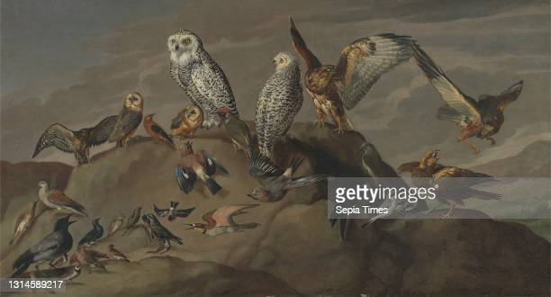 Study of Birds, unknown artist, eighteenth century, Formerly attributed to Jacques-Laurent Agasse, 1767–1849, Swiss, active in Britain , ca. 1840,...